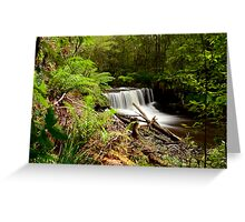 Forest Treasure. Greeting Card