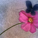 Cosmos and Butterfly by Eve Parry