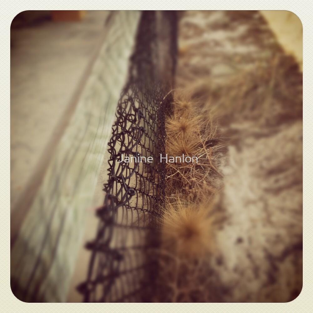 The Wire by Janine  Hanlon