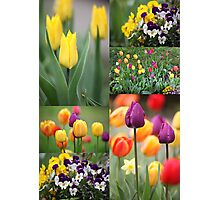 beautiful colorful flowers  Photographic Print