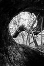 Burnt Spiral  by Emma  Gilette