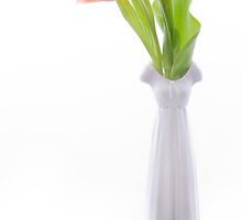 colorful tulips in vase by torishaa
