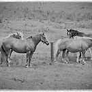 The Mares by Baldric