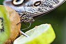 Kiwi smoothie by PhotosByHealy
