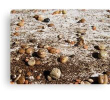 SPRING 14 - FEED THE LAND Canvas Print