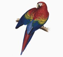 Illustration of A Scarlet Macaw Isolated On White Baby Tee
