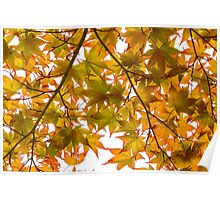 Under the Japanese Maple - Impressions Of Fall Poster
