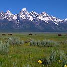 Grand Teton Bison panorama by Brian Harig