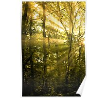 Sunrays Through the Trees Poster