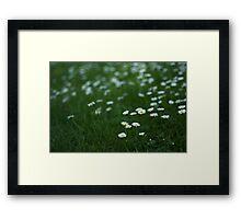 Little white daisies Framed Print
