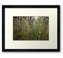 Flowers during sunset Framed Print
