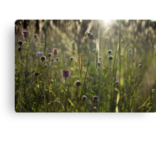 Flowers during sunset Canvas Print