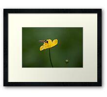 Bug on a yellow flower Framed Print