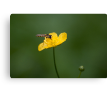 Bug on a yellow flower Canvas Print