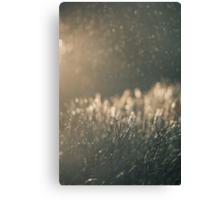 Rain and light Canvas Print