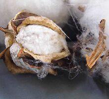 Cotton by WildestArt