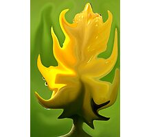 Tulip Yellow Liquify 01a Photographic Print