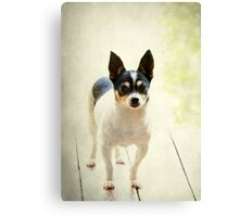 Sweet Eddie ~ Canvas Print