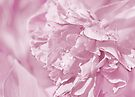 Peony In Pastel Pink by Laurie Minor