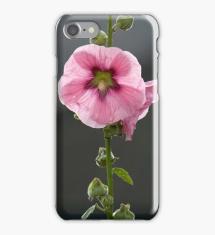 Holly hock in summer sunshine. iPhone Case/Skin