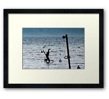 Cormorants on the lake Framed Print