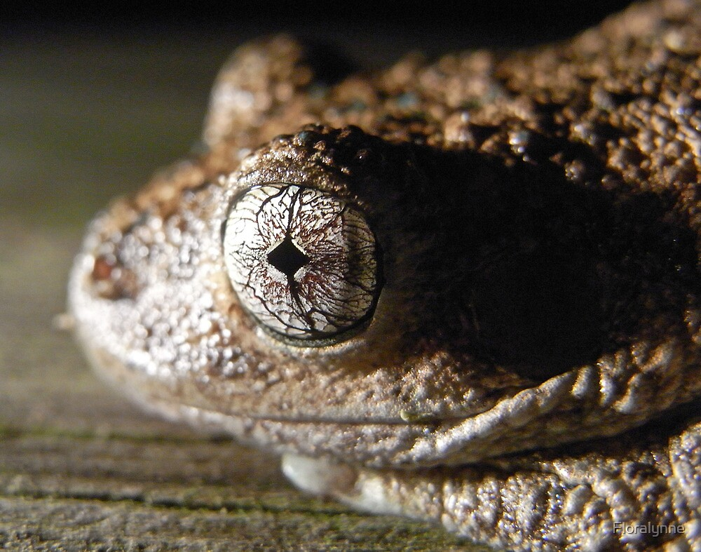 peron's tree frog by Floralynne