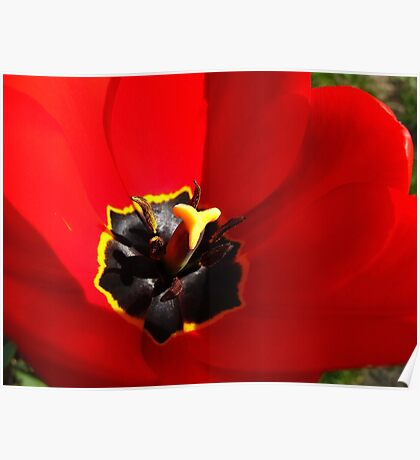 The Welcome Tulip Mat Poster