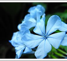 blue flowers by andrea-ioana