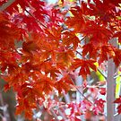 Fall Red Leaves by K D Graves Photography