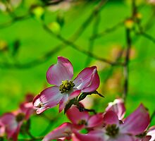 Pink and green by LifePictures