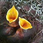 feeding baby birds by Stephanie  Barry