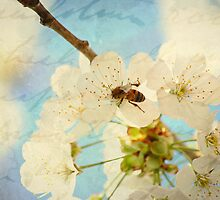A Busy Bee by BPhotographer