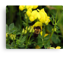 Talk about a Bee in Your Bonnet Canvas Print