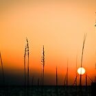 Sunset over the Gulf by Jacki Campany