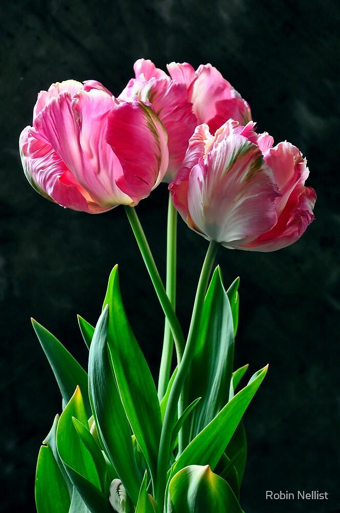 """Salmon Parrot"" tulip by Robin Nellist"