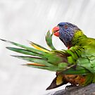 Parrot by Roma Czulowska