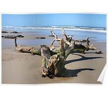 Driftwood on the 4WD Beach, NSW Poster