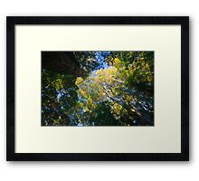 Earth Lungs Framed Print