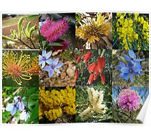 Wildflowers of Western Australia Poster