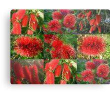 Red Bottlebrush Metal Print