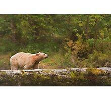 Spirit loves rain Photographic Print