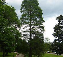 My Favorite Tree Is Green Again by dge357