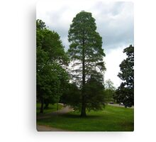 My Favorite Tree Is Green Again Canvas Print