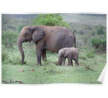 elephant mother and baby Poster