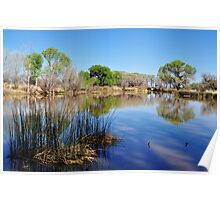 San Pedro Riparian Conservation Area- pond Poster
