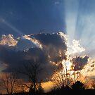 Sunburst  by nikspix