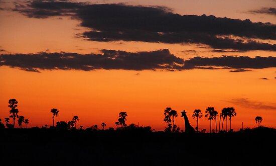 Last light by Dan MacKenzie