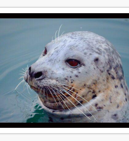 Mr Seal Sticker