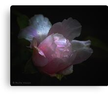 Peony in the rain Canvas Print