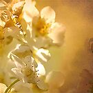Blossom Unknown .. by Mike  Waldron